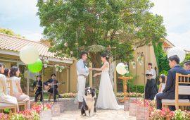 photo_gallery_wedding_025