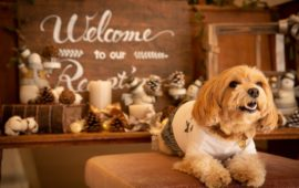 家族の一員、愛犬・愛猫ちゃんも一緒にお祝い!エスポワールで叶える、にゃんともHAPPYなワンダフルウェディング