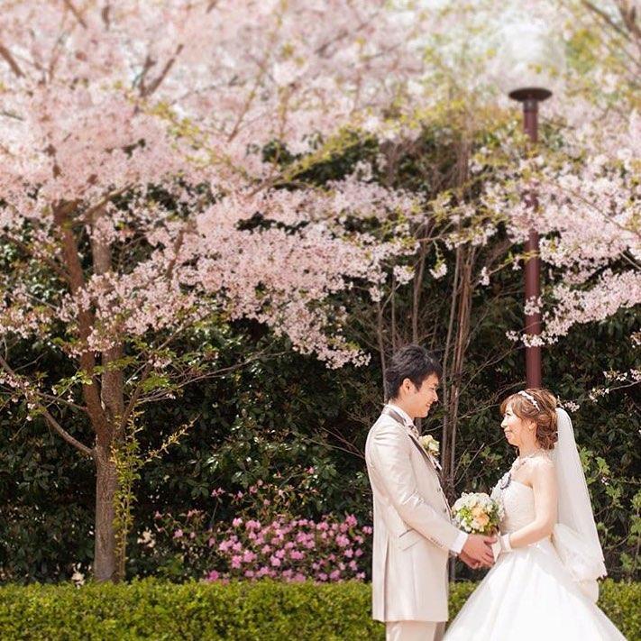 桜の樹の下でウエディングフォト_エスポワール