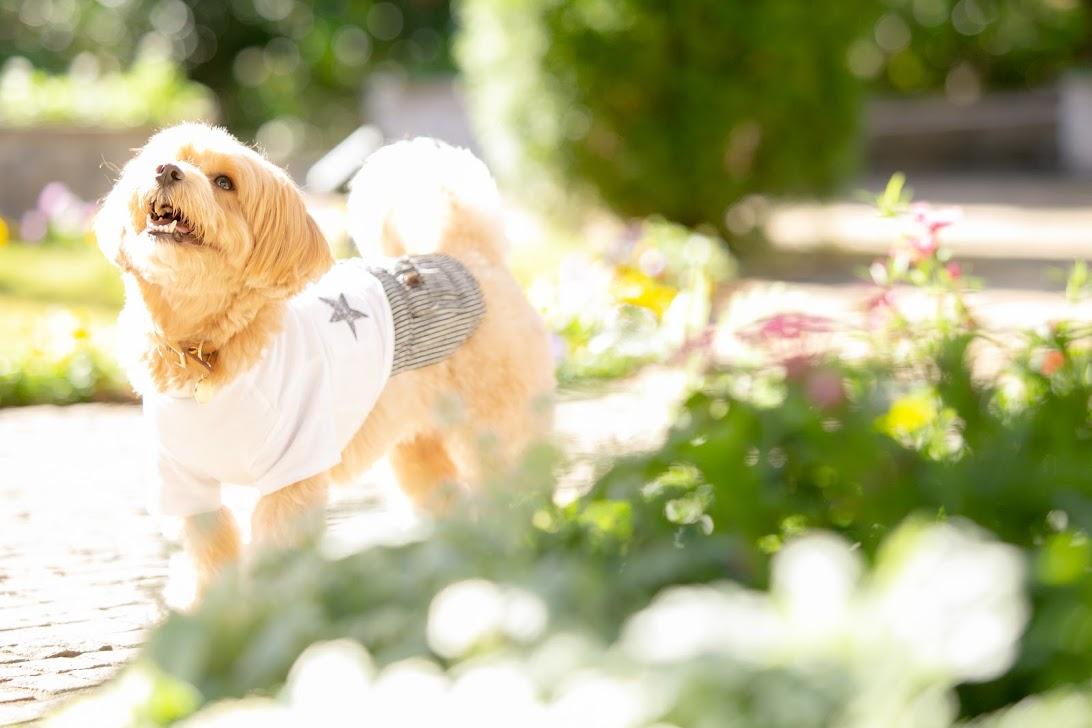 きれいに着飾ったワンちゃん_ガーデンウエディングの魅力とは?~三密を防いで楽しいひとときを~